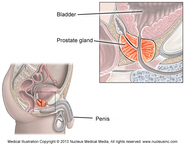 Mri Of The Prostate Insideradiology